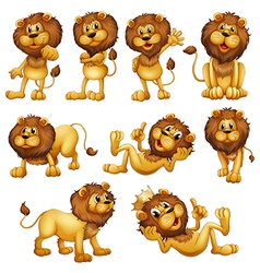 Lions in different positions vector image vector image