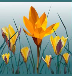 yellow crocus blooming flowers isolated on white vector image