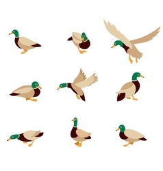 Bird icon collection vector