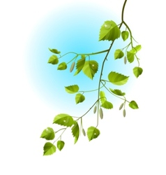 Realistic branch of birch vector