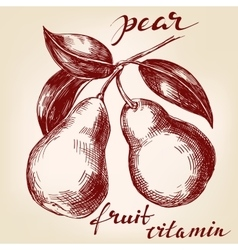 Fruit pears on the branch hand drawn vector