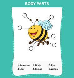 Bee vocabulary part of body vector