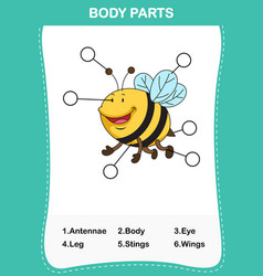 Bee vocabulary part of body vector