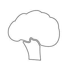 broccoli black color path icon vector image