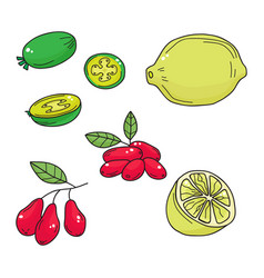 Hand drawn sketch fruits - pineapple guava lime vector