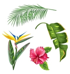 Tropical leaves and flowers set palms branches vector