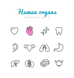 Set of human organs icons vector