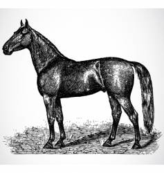 antique horse vector image