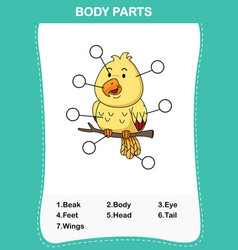Bird vocabulary part of body vector