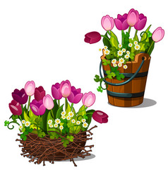 pink tulips in wooden bucket and nest vector image vector image