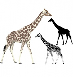 Walking giraffe vector