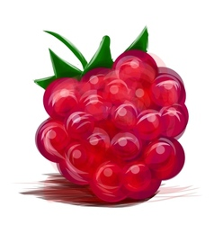 Juicy raspberry isolated on white vector image