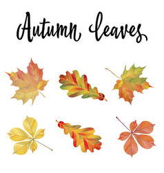 set of different autumn leaves vector image vector image