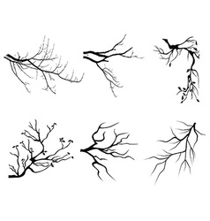branch Silhouette shapes vector image