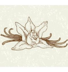 Vaniila flowers vector image vector image