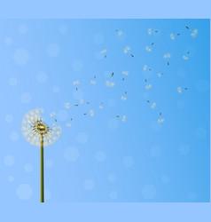 dandelion seed escape vector image