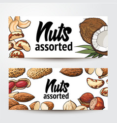 Banner design with coconut cashew peanut vector