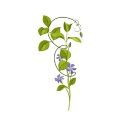 Bindweed wild flower hand drawn detailed vector