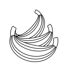 Sweet bananas fruit vector