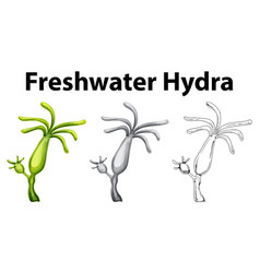 doodle drawing for freshwater hydra vector image