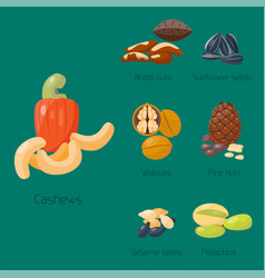 piles of different nuts pistachio hazelnut almond vector image