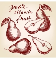Fruit pear set hand drawn llustration vector