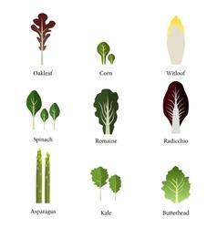 Set of salad bowl leafy vegetables green salad vector