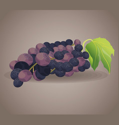 Grape fruit ingredient wine vector