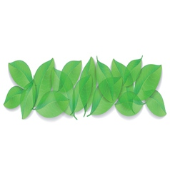 Green leaves close-up on white background vector