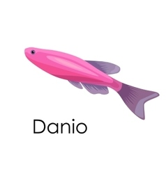 Aquarium fish Danio isolated vector image vector image