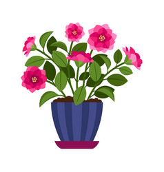 Camellia house plant in flower pot vector