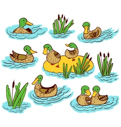 Set with ducks and reed on water vector
