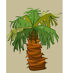 cartoon palm tree with a thick short barrel vector image vector image