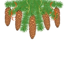 Spruce branches with cones vector image vector image