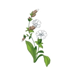 White marigold wild flower hand drawn detailed vector