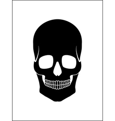 Black skull vector image