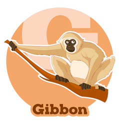 Abc cartoon gibbon vector