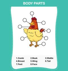 Chicken vocabulary part of body vector