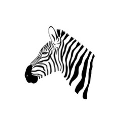black and white zebra portrait with side view vector image