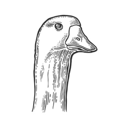 Head goose vintage monochrome engraving vector