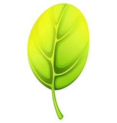 A green leaf vector