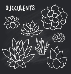 Graphic set of succulents isolated on chalk board vector