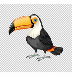 cute toucan bird on transparent background vector image vector image