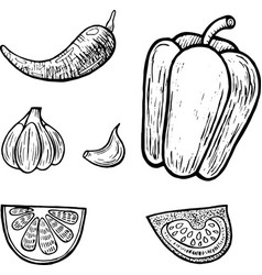 Mexican vegetables set graphic coloring page for vector