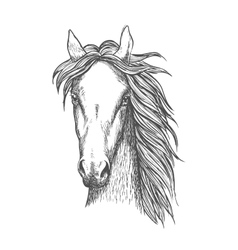 Muscular thoroughbred horse sketch symbol vector image