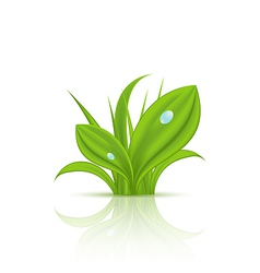 Green grass with drops isolated on white vector image