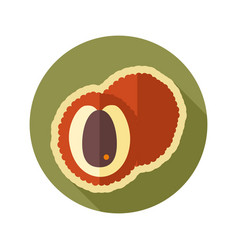 Lichee flat icon tropical fruit vector