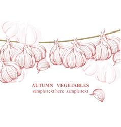vintage garlic background line art graphic vector image