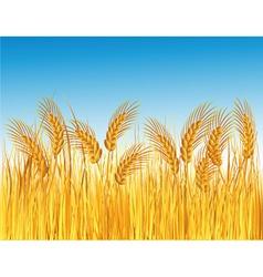 Cereal field vector