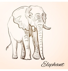 doodle elephant vector image